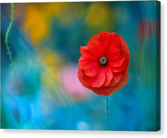 A Touch Of Poppy Magic Canvas Print
