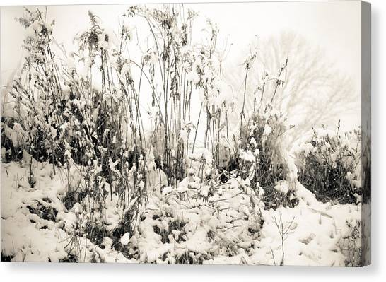 A Touch Of Snow Canvas Print by Nancy Edwards