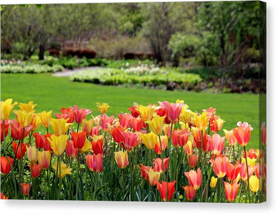 A Touch Of Spring Canvas Print by Rosanne Jordan