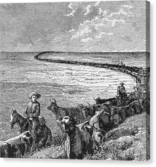Bull Riding Canvas Print - A Trail In The Great Plains, Illustration From Harpers Weekly, 1874, From The Pageant Of America by American School