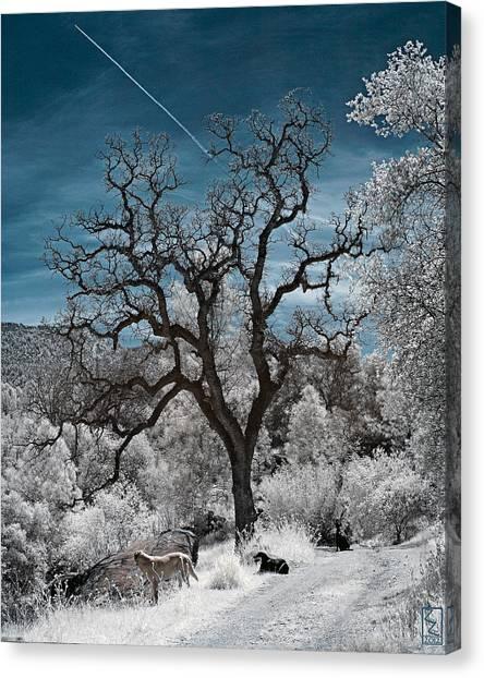 A Trail Not Taken Canvas Print
