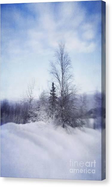 Birch Canvas Print - A Tree In The Cold by Priska Wettstein