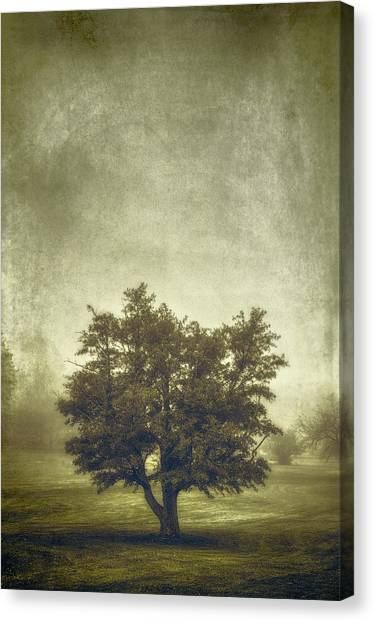 Monochromatic Canvas Print - A Tree In The Fog 2 by Scott Norris
