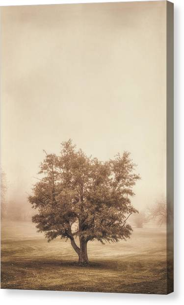 Cloudy Canvas Print - A Tree In The Fog by Scott Norris