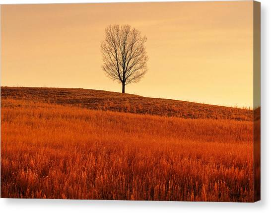 A Tree Is An Object Of Beauty Vii Canvas Print