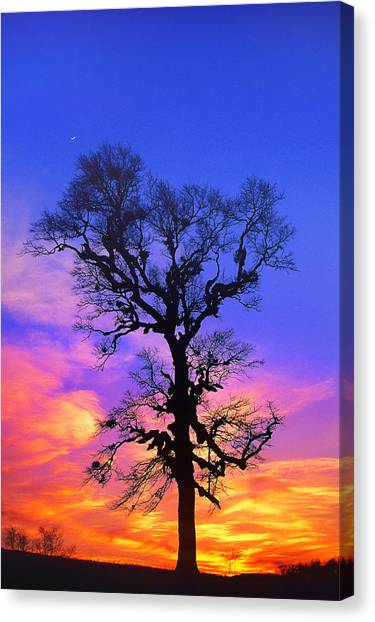 A Tree Is An Object Of Beauty Xiv Canvas Print
