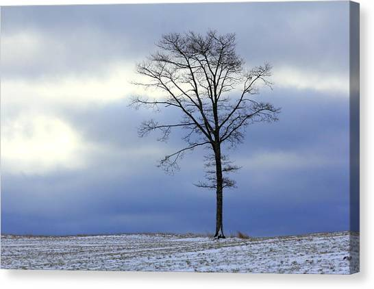 A Tree On A Field Of Snow Canvas Print