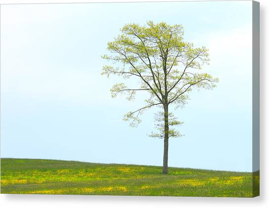 A Tree On A Hill Of Wildflowers Canvas Print