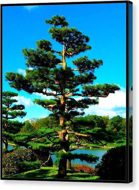 A Tree... Canvas Print