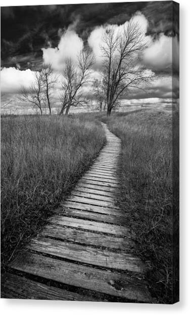 A Tree's Road Canvas Print