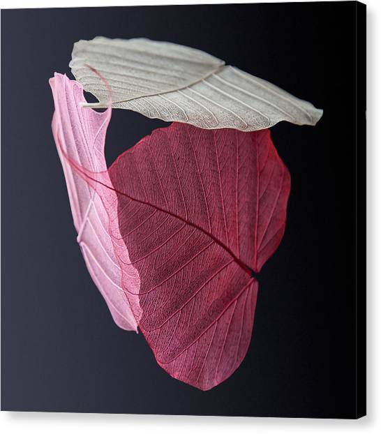 Leaf Canvas Print - A Trinity Of Leaves by Maggie Terlecki