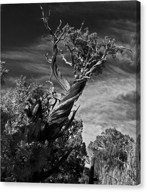 A Twisted Life  Canvas Print