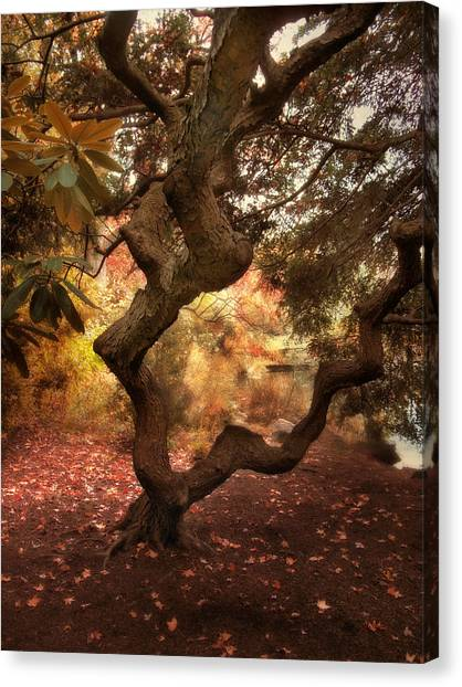 Arbor Canvas Print - A Twisted Tree by Jessica Jenney