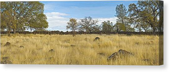 A Very Very Old Fence Canvas Print by Charlie Osborn