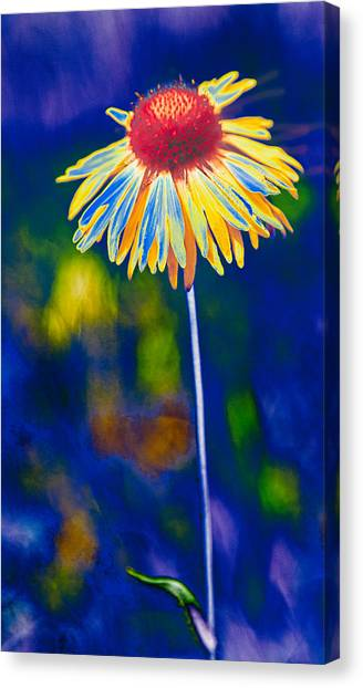 A Very Wild Flower Canvas Print