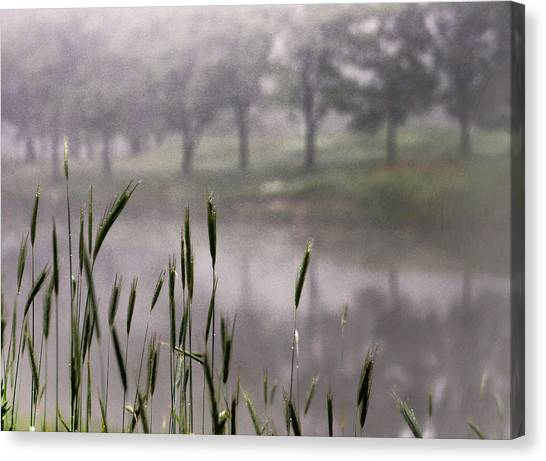 A View In The Mist Canvas Print