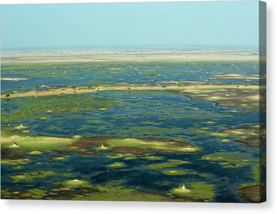 Okavango Swamp Canvas Print - A View Of A Wetland In Botswana by Beverly Joubert