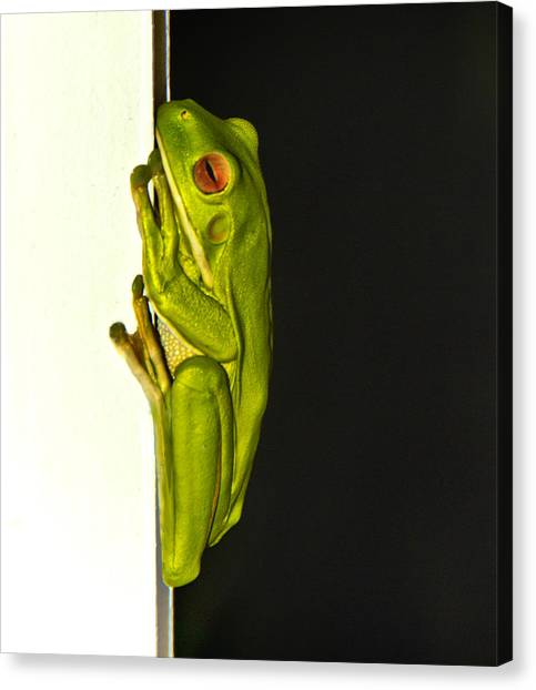A Visit From A Giant Tree Frog Canvas Print by Debbie Cundy
