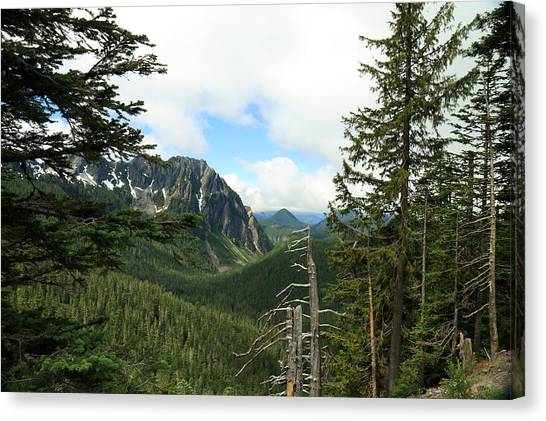 A Vista - Mt. Rainier National Park Canvas Print