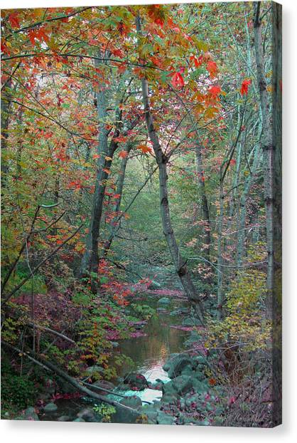 A Walk In The Park - Nature Photography  Canvas Print