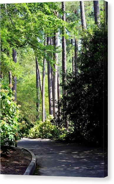 A Walk In The Shade Canvas Print