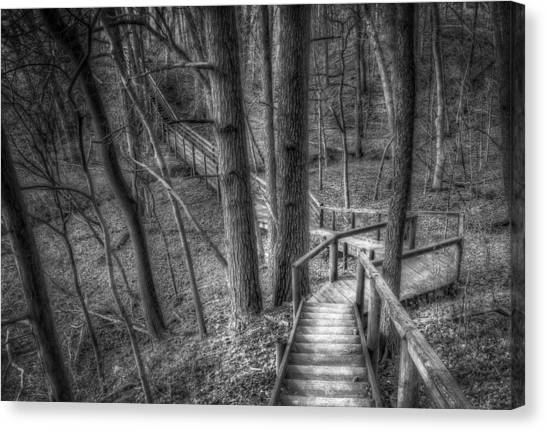 Black Forest Canvas Print - A Walk Through The Woods by Scott Norris