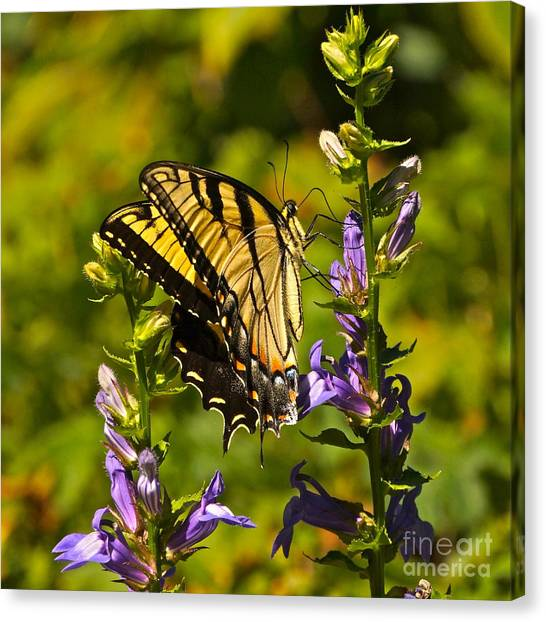 A Warm September Day In The Garden Canvas Print