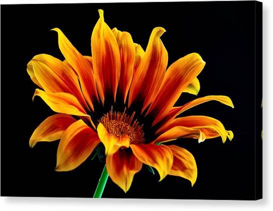A Waving Flower Canvas Print