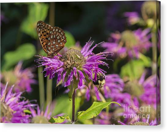 A Wild Garden Party Canvas Print