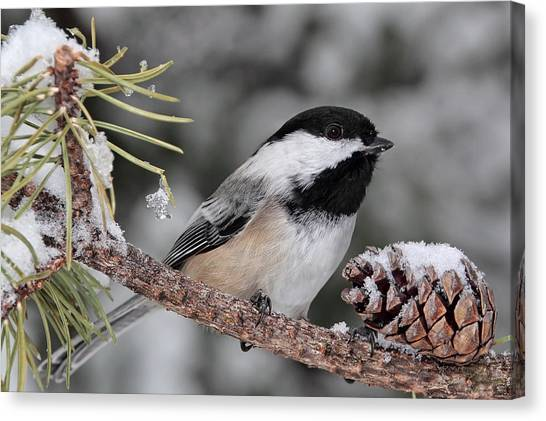 A Winter Perch Canvas Print