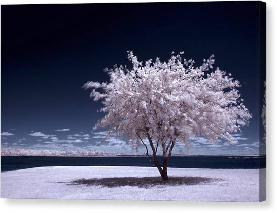 A Winter Summer Canvas Print