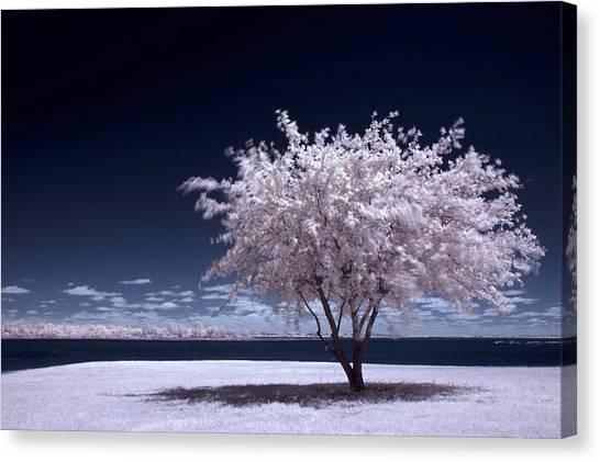 A Winter Summer Canvas Print