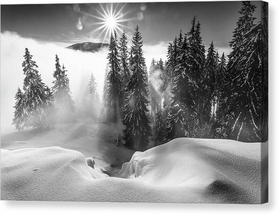Pine Trees Canvas Print - A Winter Tale ! by Sorin Onisor