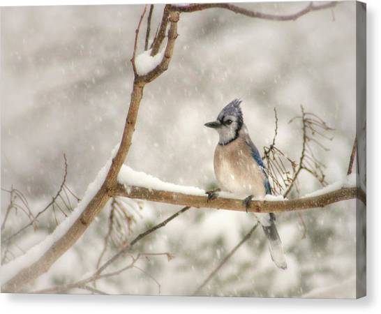 Bluejays Canvas Print - A Winter's Day by Lori Deiter