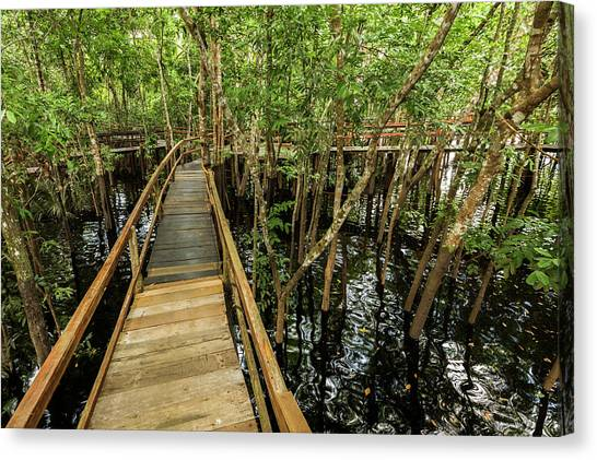 Amazon River Canvas Print - A Wooden Walkway At A Jungle Lodge by James White