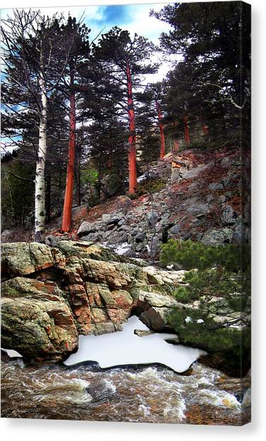 Abert's Squirrel Canvas Print by Ric Soulen