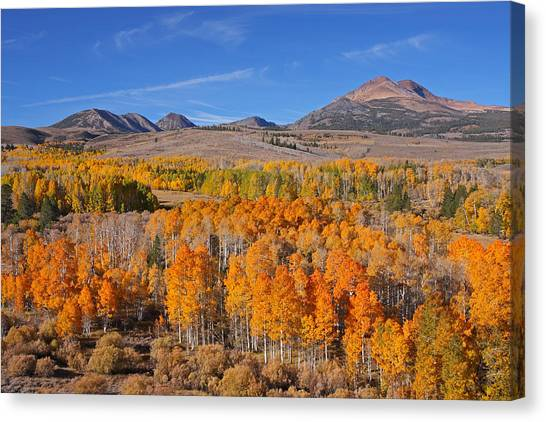Ablaze With Color Canvas Print