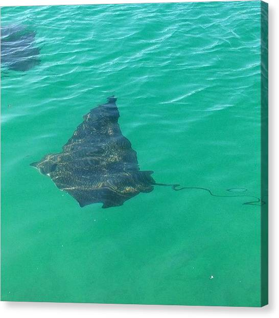 Bahamas Canvas Print - About To Dive In The Cannal When This by Amelia J Design