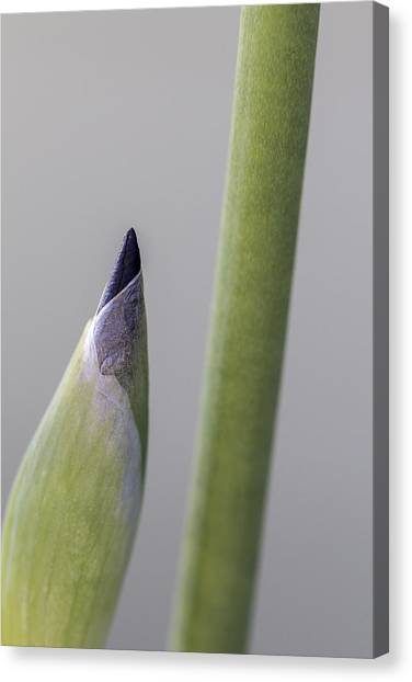 About To Unfurl Canvas Print