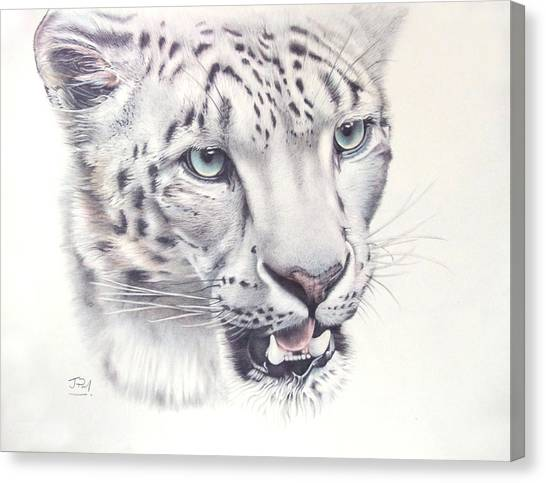 Canvas Print - Above The Clouds - Snow Leopard by Jill Parry