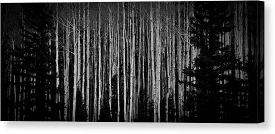 Abstract Aspens Canvas Print
