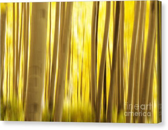 Colorado Rockies Canvas Print - Abstract Aspens by Juli Scalzi