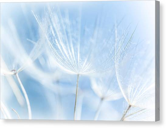 Abstract Dandelion Background Canvas Print by Anna Om