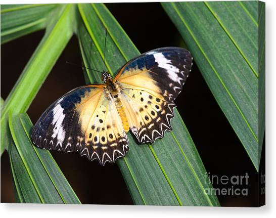 Butterfly On Leaves Canvas Print