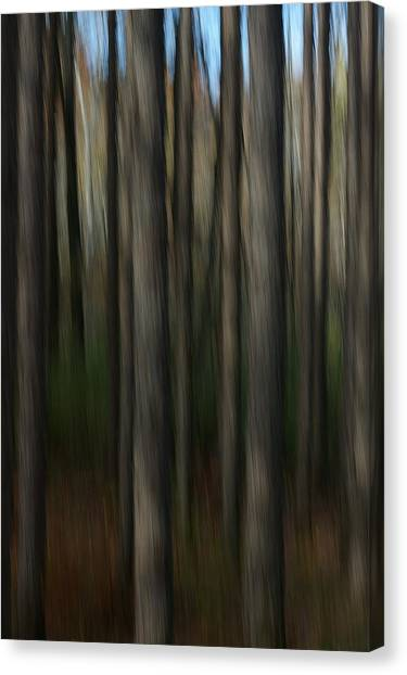 Abstract Woods Canvas Print