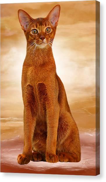 Abyssinian Cat Sorrel Color Canvas Print
