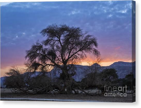Negev Desert Canvas Print - Acacia At Sunset by Eyal Bartov