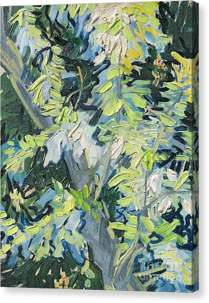 Vincent Van Gogh Canvas Print - Acacia In Flower by Vincent van Gogh