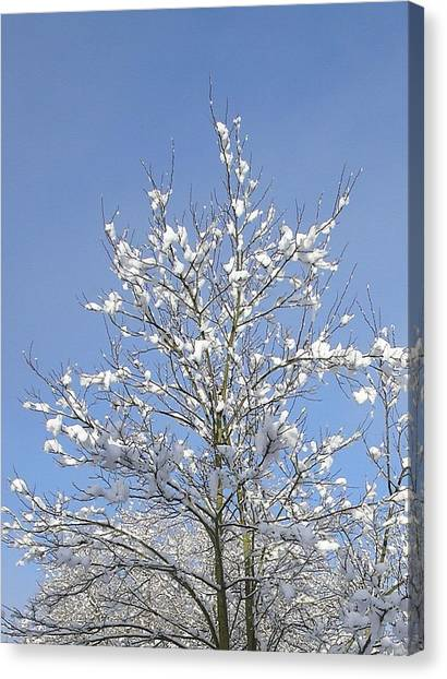 Ash Tree In Winter Canvas Print