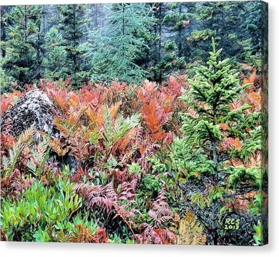 Acadia Ferns Canvas Print